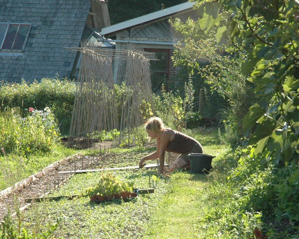 green gardening, biochar, soil improver