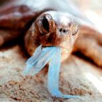 ocean wildlife & plastics