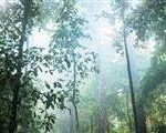 rainforest campaigns, sustainable palm oil