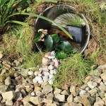 eco pond, wildlife pond, green gardening