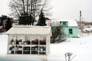 winter greenhouse care