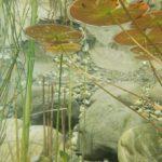 wildlife pond, green gardening,