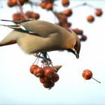 birdspotter app
