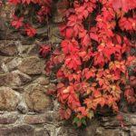 green wall, eco gardening, wildlife gardening
