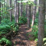 woodland burials midlands